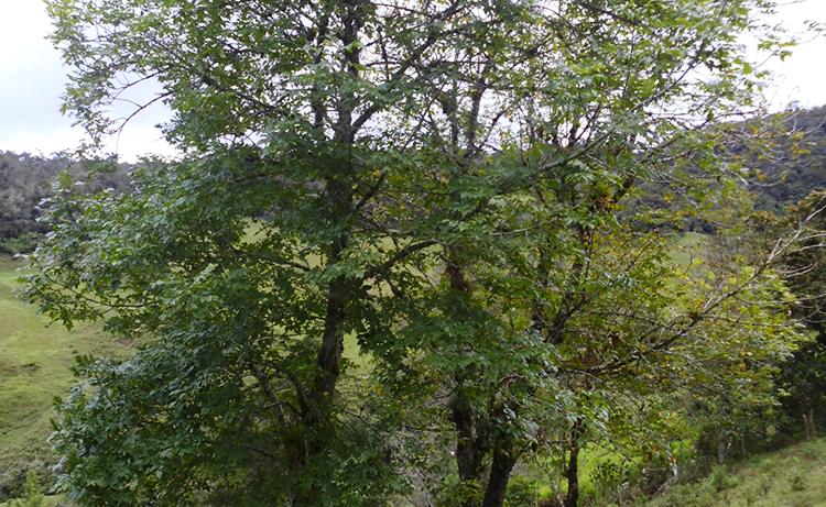 Bosque y jard n servicios forestales y ambientales for Carson bosque y jardin